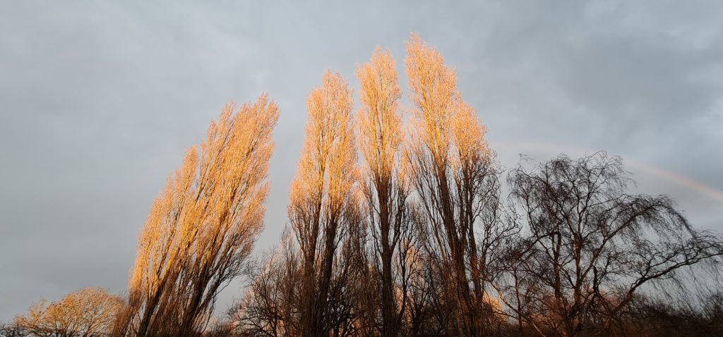 photograph shows the tops of trees, partially in the shade at the base, partially lit by the orange glow of magic-hour, with grey cloudy skies behind and a slight arc of a rainbow behind them.  the image is used here to present the complications of balancing both the light and dark aspects of our lives across our ecosystems of nature and human coexistence.